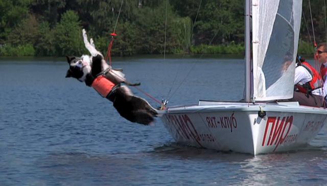 animals-on-yacht-06.jpg