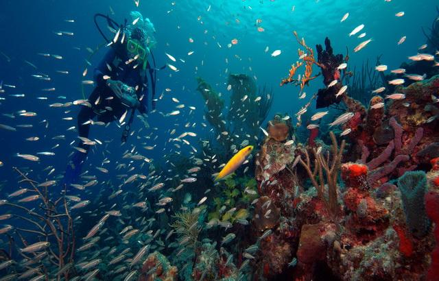 Карибские острова, карибы, мартиник, нг, новый год, рождество, виндсерфинг, дайвинг, кайтинг, катамаран, океан, парус