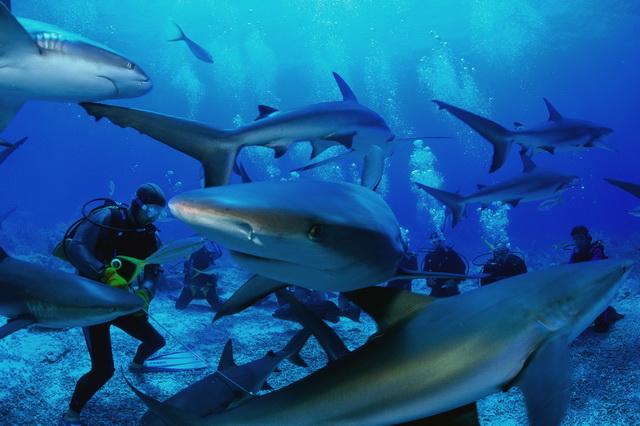 острова палау фото