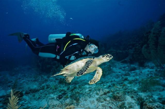Дайвинг: экотуризм на карибских островах