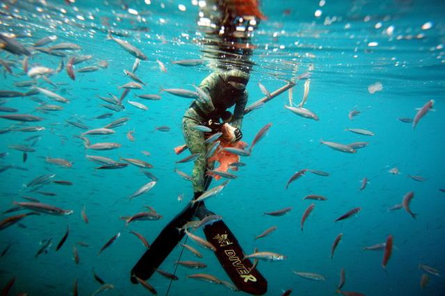 Подводная охота - советы для новичков
